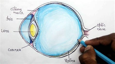 how to draw eye diagram how to structure of human eye step by step for beginners