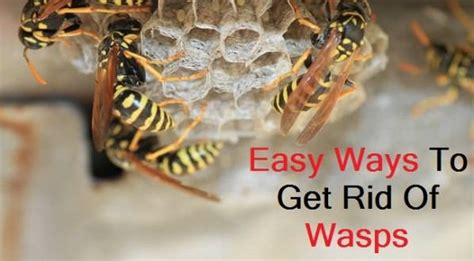 how to get rid of wasps in house siding how to get rid of wasps