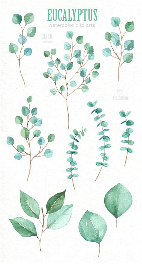 eucalyptus leaf watercolor clipart by everysunsun on creativemarket random stuff in 2019
