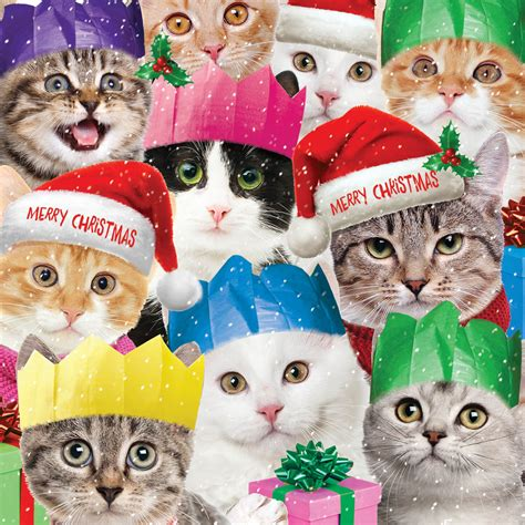 funny cats christmas card   island