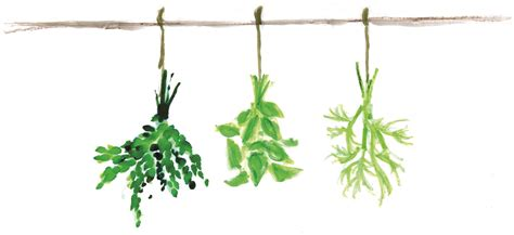 les herbes aromatiques en cuisine comment deshydrater au micro onde po le cuisine inox of