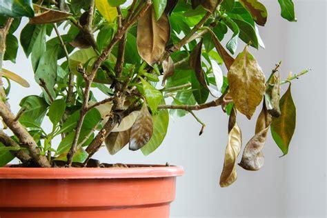 plants turning yellow