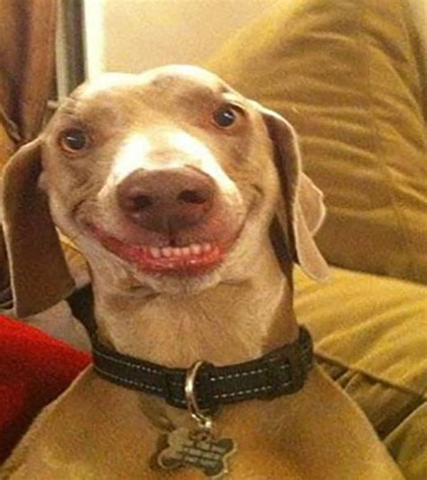 silly dogs top 30 faces funnypica