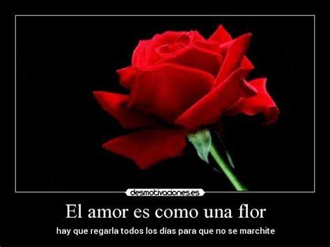 frases sobre regar el amor el amor es como una flor desmotivaciones