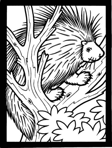 301 Moved Permanently Porcupine Coloring Page