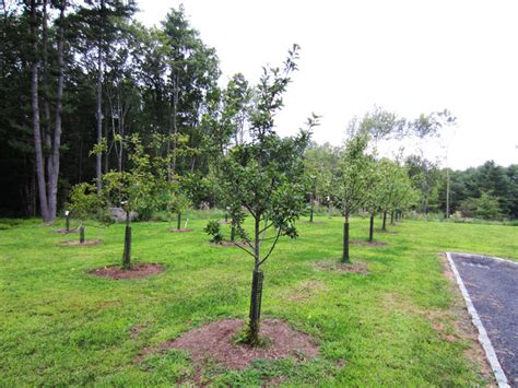 fruit tree orchard and berry patch installation