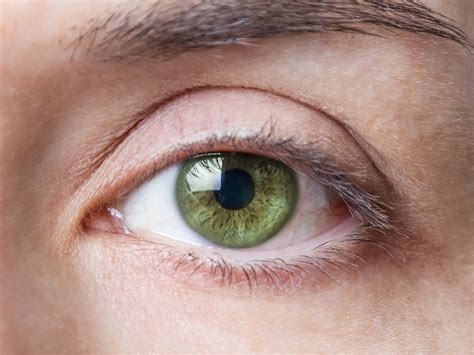 what part of the eye has color beautiful green up www imgkid the image