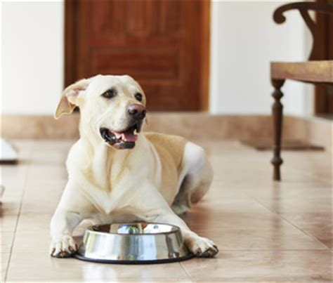 6 Ways This Veterinarian Handles The Perpetually Unhungry Pet | 6 ways this veterinarian handles the perpetually unhungry