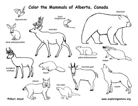 north america biome map coloring coloring pages