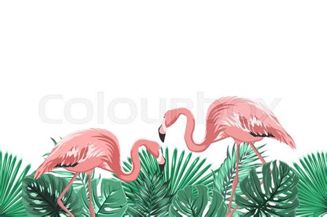 flamingo wallpaper border flamingo border pictures to pin on pinterest pinsdaddy