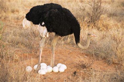 imagenes de animales que nacen del huevo animales que nacen del huevos imagui