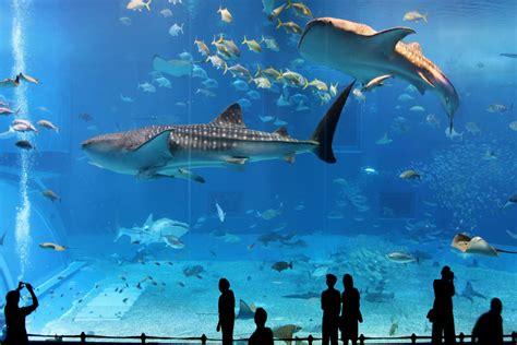 japanese aquarium osaka a large city in japan impressive magazine