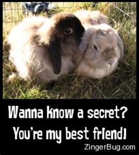best bunny fibonacci bunnies page 5 yehoodi