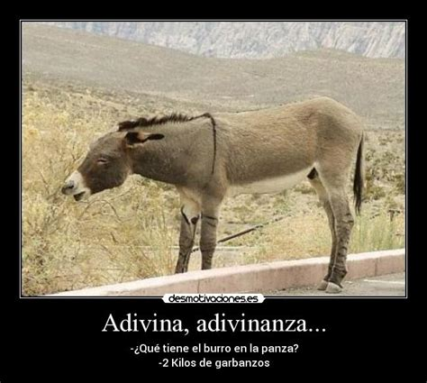 burros con yeguas pin burro con yegua movie video mp3 search engine on pinterest