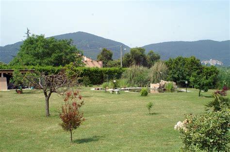 piante da mettere in giardino alberi da mettere in giardino
