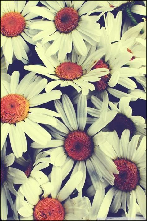interesantes y bonitos fondos de escritorio de flores m 225 s de 25 ideas fant 225 sticas sobre fondos de pantalla