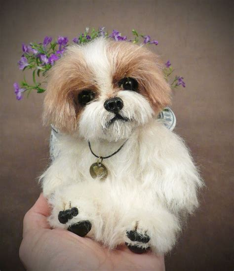 what makes a shih tzu 289 best images about seriously shih tzu s just make me happy so smile with me