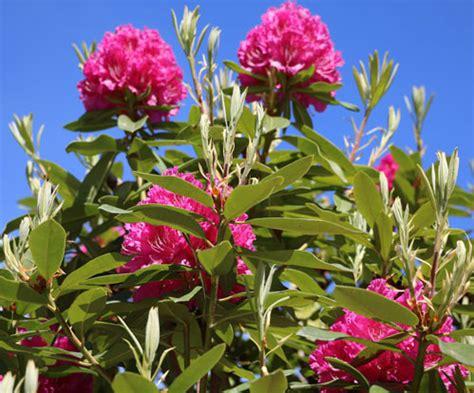piante fiorite in inverno 5 piante fiorite per il giardino d inverno one giardinaggio