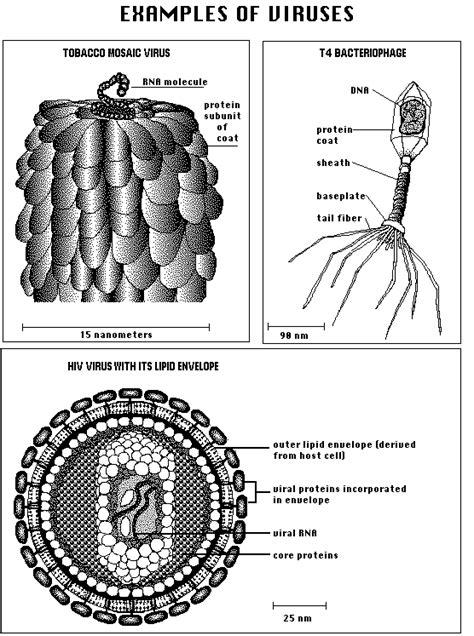 virus  symptoms treatment virus