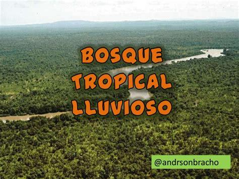 imagenes de otoño lluvioso bosque tropical lluvioso