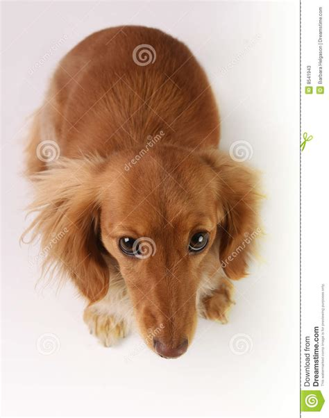bad puppy bad puppy stock photos image 8541943