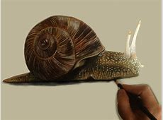 Drawn snail realistic - Pencil and in color drawn snail ... Naturalistic Design Drawing