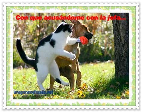 imagenes chistosos de perros imagenes de perros y gatos chistosos con frases imagui