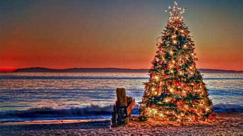 christmas traditions in australia facts in australia customs and traditions dingoos
