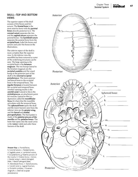anatomy and physiology coloring book kaplan superior skull anatomy coloring pages joker skull coloring