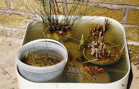 piccolo laghetto in giardino realizzazione di un piccolo laghetto in giardino fans