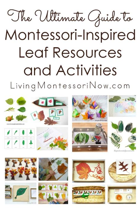 The Ultimate Guide To Resources by Fall Leaf Unit Study Archives Living Montessori Now