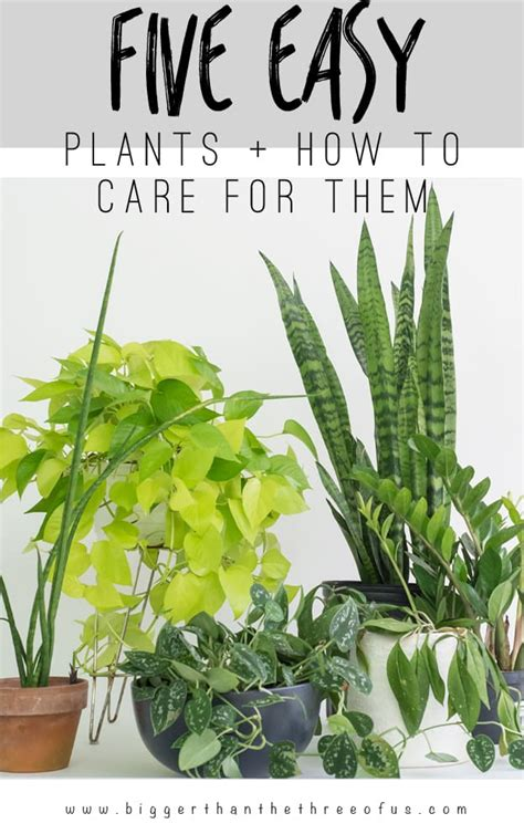 easy to take care of indoor plants 5 easy houseplants and how to care for them bigger than