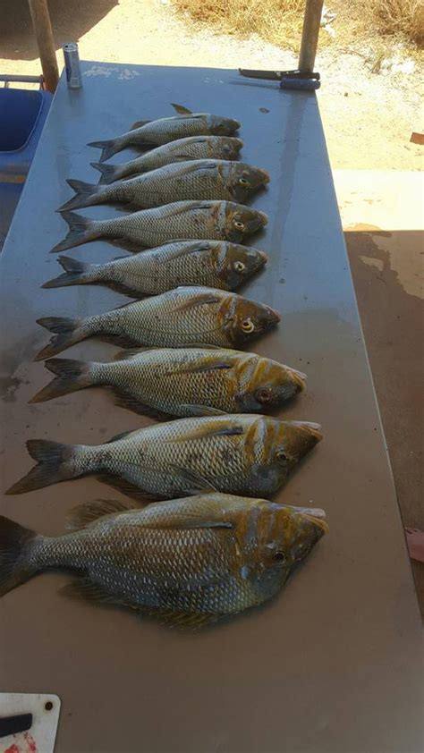 fishing boat hire exmouth exmouth boat hire snapper2 exmouth boat hire
