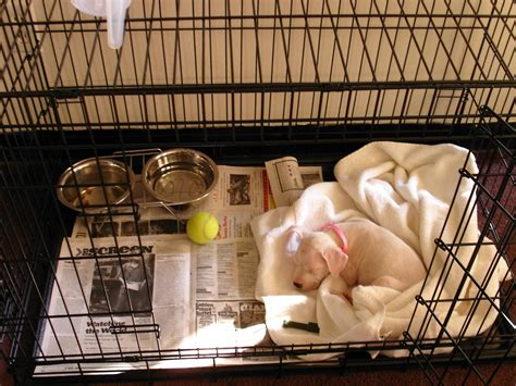 crate training how to take care of your new puppy part 1 tips and