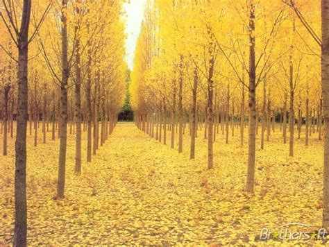 gold themes free download free the autumn gold theme the autumn gold theme