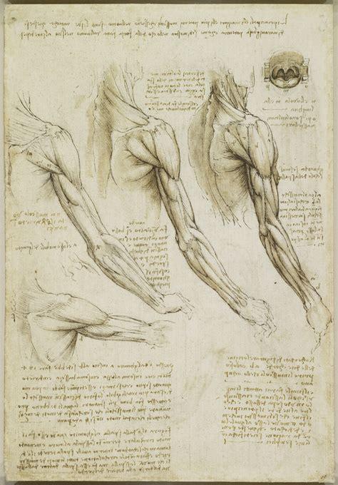 tavole anatomiche muscoli muscoli braccio vene braccio e tronco