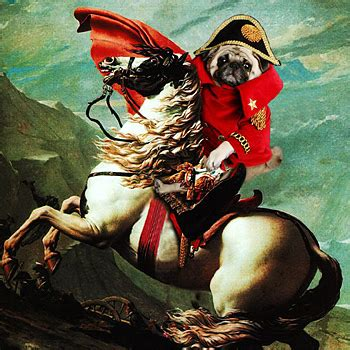 what are pugs known for pug dogs dressed as gallery mail