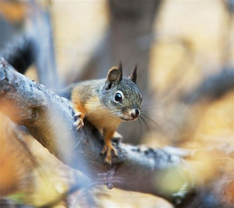 how to stop a from chewing on wood how to prevent squirrels from chewing power lines prairie electric