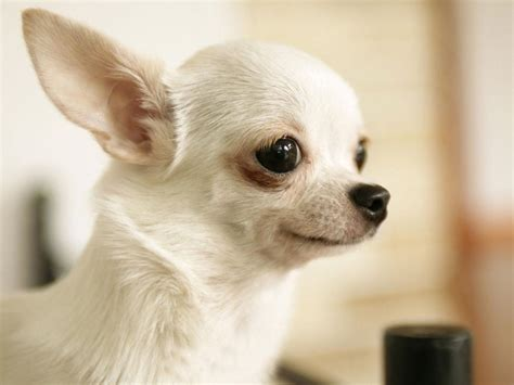 cute dogs wallpapers animals zoo park 8 cute puppies wallpapers cute puppy