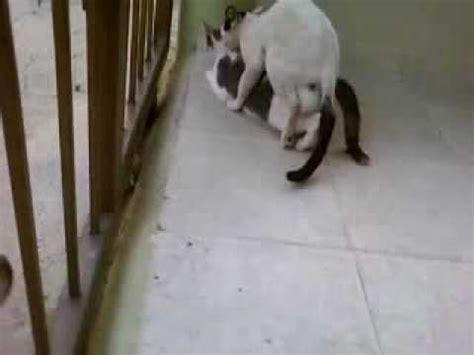 imagenes gratis asiendo el amor gato haciendo el amor youtube