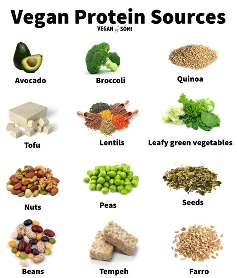protein vegetables vegan protein sources grains legumes vegetables