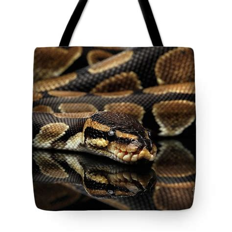 Python Pillow Pdf by Or Royal Python Snake On Isolated Black Background