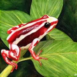 aposematic coloration poisonous tree frog