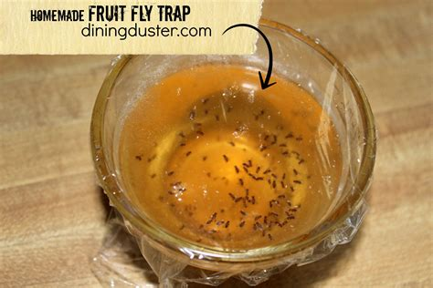 Handmade Traps - get rid of pesky fruit flies with an easy diy fruit fly