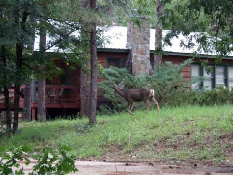 deer everywhere forest home cabins ruidoso picture of