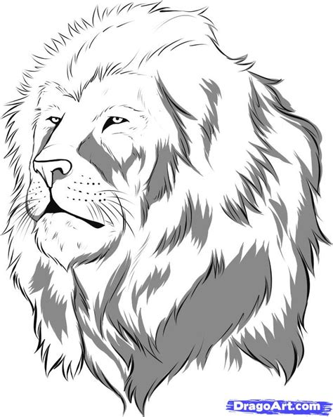 coloring pages animals realistic lion how to draw a realistic lion draw real lion step by step