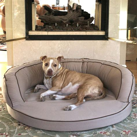 frontgate dog beds l a dog ortho bolster dog bed traditional dog beds by frontgate