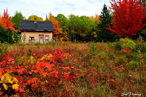 in fall news where to see the best and brightest fall foliage in
