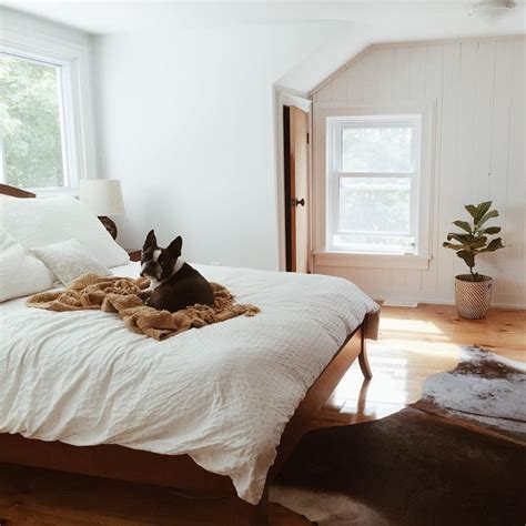 simple cozy bedroom 1000 ideas about dog bedroom on pinterest dog rooms