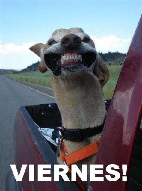 imagenes graciosas para instagram 10 frases de fin de semana para twitter facebook e